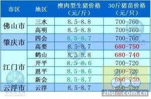 牧之源-广东省1月13日猪价