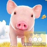 1月14日安徽省猪市行情信息