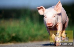 【文捷集团】1月15日辽宁省猪评:未来几天毛猪价格以平稳为主
