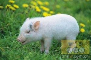 1月15日安徽省猪市行情信息