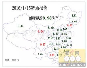 今天开始正式进入到春节前的毛猪走势阶段,是涨还是跌?