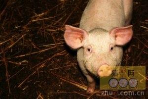2016年1月17日国家级重庆(荣昌)生猪交易市场交易信息