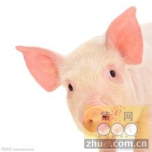 1月18日安徽省猪市行情信息