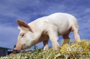 1月19日安徽省猪市行情信息