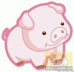 1月20日安徽省猪市行情信息