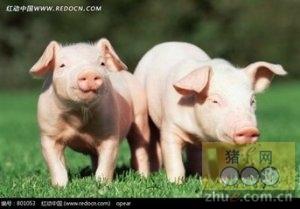 2016年1月19日国家级重庆(荣昌)生猪交易市场交易信息