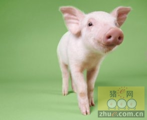2016年1月20日国家级重庆(荣昌)生猪交易市场交易信息