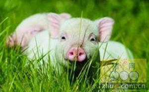 1月21日安徽省猪市行情信息