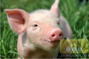 【每日一图】全国猪价格涨跌示意图-1月21日猪评【压价失败,雨雪助力上行】