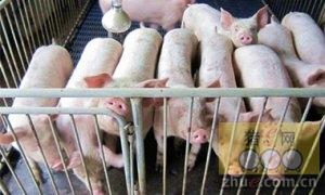 1月22日安徽省猪市行情信息