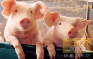 1月25日安徽省猪市行情信息