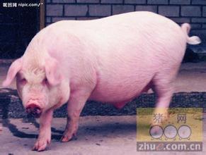 1月28日安徽省猪市行情信息