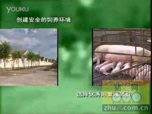 无公害生猪饲养综合技术
