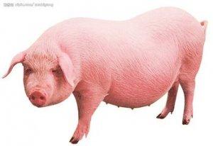 4月12日猪价行情:猪市僵持态势难改 生猪价格调整幅度偏弱
