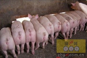 4月22日安徽省猪市行情信息