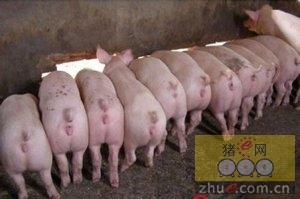 4月25日安徽省猪市行情信息