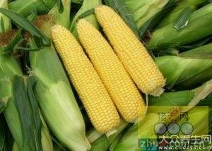 8月30日料评:玉米短期弱稳,豆粕现货相对抗跌