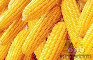 2016年12月26日国内玉米价格汇总