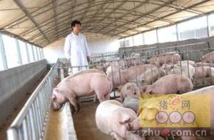 育肥猪如何管理才能早