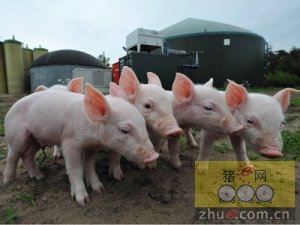 国内部分大型养猪集团养殖规模及未来规划一览