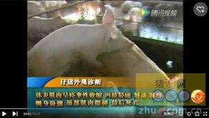 猪蓝耳及猪呼吸道(3)