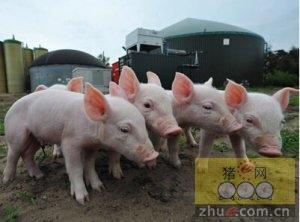 """猪这一辈子最难熬的是保育阶段,关爱仔猪等于关爱""""钱袋子"""""""