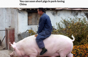 生猪指数发布 外媒感叹中国太爱猪