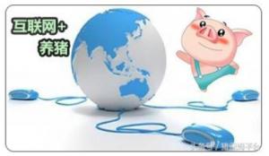 """""""互联网+养猪""""会成为未来养猪的趋势吗?"""