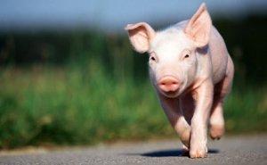 [猪价]川渝各县4月10日生猪价格表