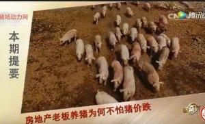 养猪竟然不怕猪价跌?为何他这么牛!