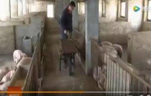 养猪神器 青绿玉米秸秆养猪发酵青贮饲料机
