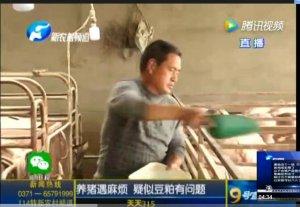 天天315:养猪遇麻烦 疑似豆粕有问题?