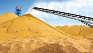 聚焦:5月18日―19日玉米拍卖将投放500万
