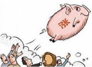 """万紫千山一片红!养殖户又看到了希望!""""猪"""