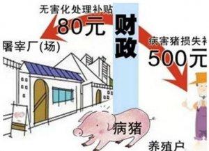 2017养猪补贴:生猪采样看病每头补30块,病死猪每头80块