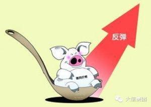 5月生猪存栏大幅下降