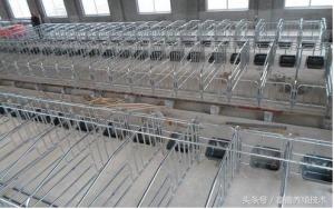 养猪:建设一个现代化养殖场须购哪些设备