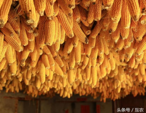 玉米市场这几件事必须关注!玉米价格上涨受限!临储玉米成交将超3000万吨!