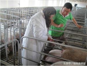 母猪深部输精的操作规程是怎么样的?
