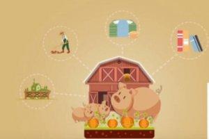 养猪又出新玩法,让你爱上养猪,赶快加入吧!