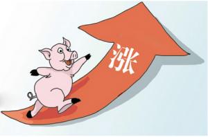 """本次回涨是6月以来最大一次,8月猪价将强硬上""""8""""?"""