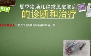 【猪病通-猪猪百科】夏季猪场几种常见皮肤病的诊断和治疗(下)