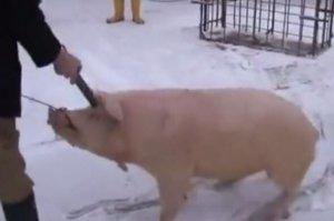 杀猪就杀猪,摆这么销魂的姿势干什么?