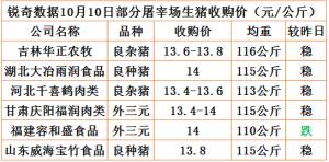 猪易通app10月10日部分企业猪价动态
