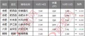 10月14日安徽省猪市行情