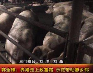 韩全锋:养猪走上致富路 示范带动惠乡邻!
