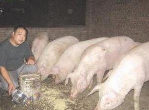 一个身价千万的养猪厂长把自己多年的养猪经验分享给大家