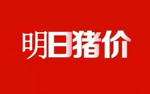【11月13日】屠宰场晚间动态!