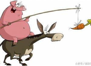 农村老汉学养猪,母猪