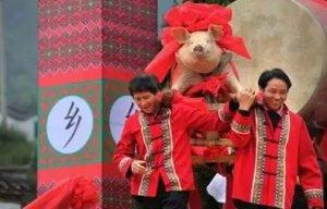 神州大地养了几千年的猪,你想知道的中国